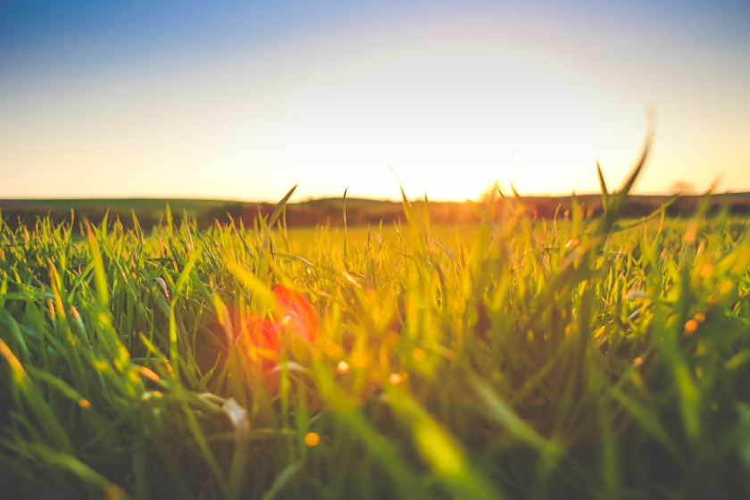 sunset-in-grass-picjumbo-com